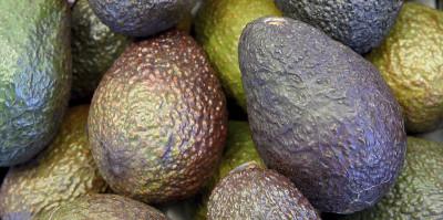 Gravi problemi neozelandesi: il furto degli avocado