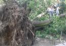 In Polonia cinque persone sono morte a causa dei temporali che hanno fatto cadere degli alberi