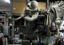 Il mercato illegale delle zanne di mammut