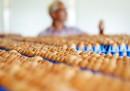 Quasi un milione di uova contaminate con un insetticida sono state ritirate dal commercio in Germania