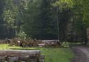La Polonia continuerà a tagliare alberi nella foresta di Bialowieza, violando gli ordini della Corte di giustizia europea