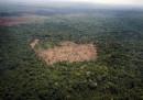 Una corte federale brasiliana ha bloccato l'abolizione di una grande riserva naturale decisa dal governo