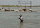 Almeno 1.200 persone sono morte per le alluvioni nel sud est asiatico