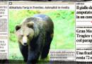 La storia dell'orsa uccisa in Trentino