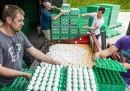 Il caso delle uova contaminate in Europa