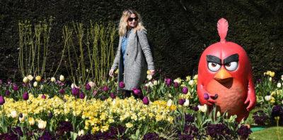 """Da oggi Rovio, l'azienda finlandese dietro """"Angry Birds"""", sarà quotata in borsa"""