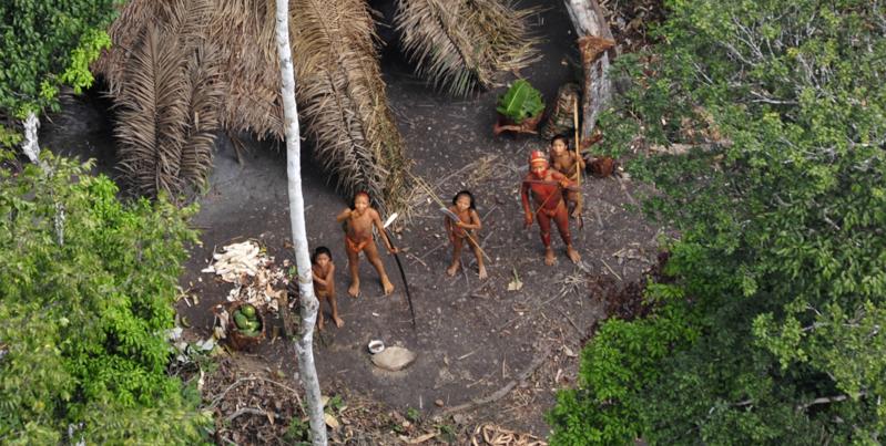 In brasile si indaga su un massacro di dieci indigeni nel for Pianta della foresta di pioppo