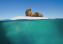 Sta arrivando un documentario sui mari diverso da qualsiasi altro