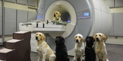 Si possono leggere le emozioni dei cani?