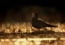 premio-foto-uccelli-2017-10