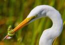 premio-foto-uccelli-2017-15