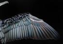 premio-foto-uccelli-2017-8