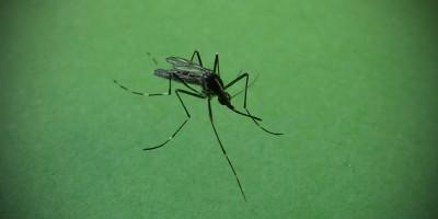Che cos'è la chikungunya
