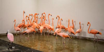 I preparativi dello zoo di Miami per l'arrivo dell'uragano Irma