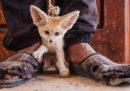 20 foto contro il traffico di animali