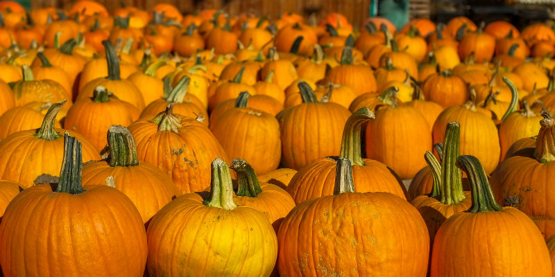 Foto Di Halloween.Da Dove Arriva La Festa Di Halloween Il Post