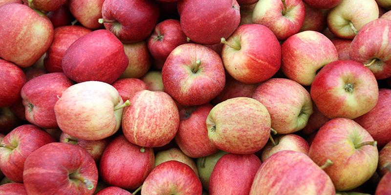 Risultati immagini per mele