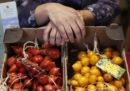 Il genetista che raccoglie i pomodori
