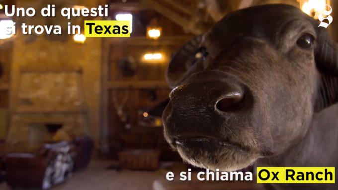 Come funzionano i ranch dove si cacciano animali in via d'estinzione
