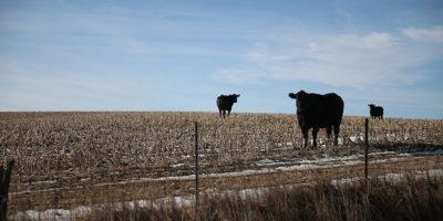 Smettere di mangiare carne porta meno benefici del previsto contro il riscaldamento globale