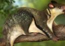 La vita notturna salvò i mammiferi dai dinosauri