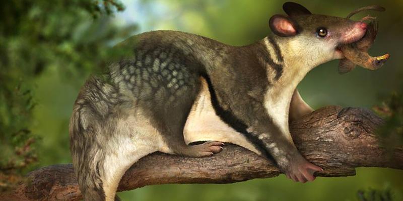 La vita notturna salvò i mammiferi dai dinosauri - Il Post
