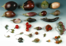 Chi è Bruno Mezzetti, che migliora le piante che mangiamo
