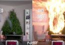 Perché è importante innaffiare l'albero di Natale (se non è di plastica)