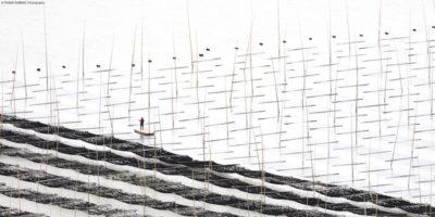Geometrie di bambù, pescatori e acqua