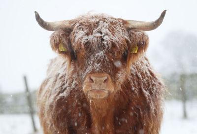 Animali E Neve Non Si Sbaglia Mai Il Post
