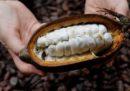 Mars vuole modificare geneticamente il cacao
