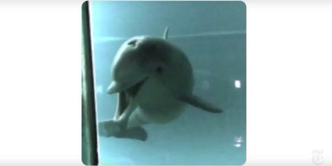 I delfini imparano a riconoscersi allo specchio prima dei bambini
