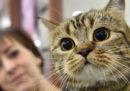 13 oggetti per chi ha un gatto