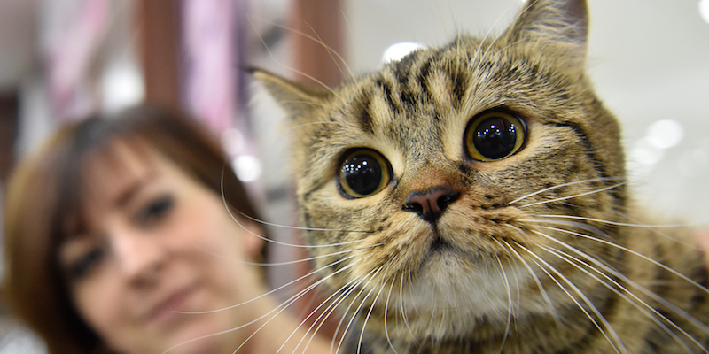13 oggetti per chi ha un gatto il post for Migliore lettiera per gatti