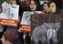 Hong Kong ha approvato una legge che bloccherà del tutto il commercio di avorio entro il 2021