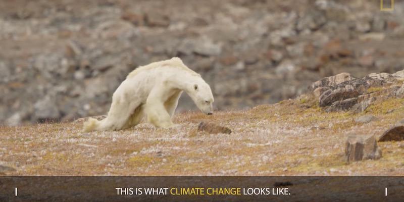 L 39 orso polare di quel video virale forse non morto per for Cabine lungolago grande orso