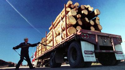 """Arriva il """"super legno"""""""