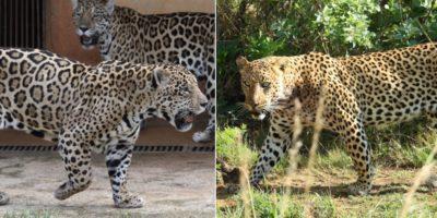 Animali difficili da distinguere