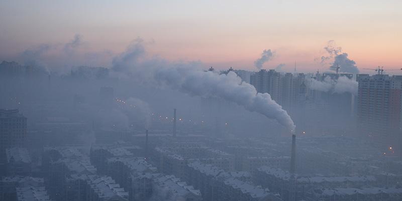 L'Amore per gli ANIMALI Cina-smog