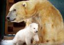 Come se la cava il cucciolo di orso polare nato in Scozia