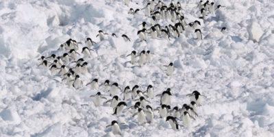 La cacca di 1,5 milioni di pinguini si vede dallo Spazio