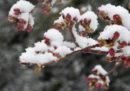 Non le solite foto di primavera