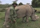 È morto l'ultimo esemplare maschio di rinoceronte bianco settentrionale