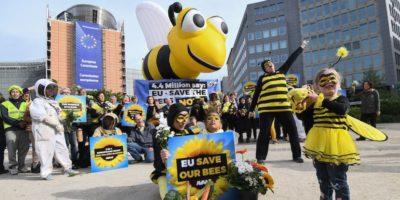 Una buona notizia per le api europee