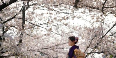 Sono i giorni dei ciliegi in fiore