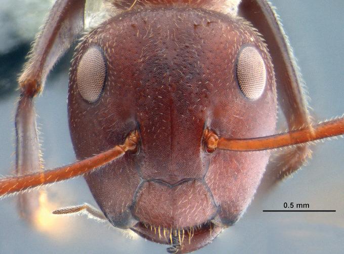 Giovane fa sesso con le formiche e rischia evirazione VIDEO