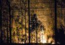 In Australia c'è un grosso incendio boschivo che è arrivato fino alla periferia meridionale di Sydney