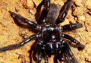 Sapete quanti anni aveva il ragno più vecchio del mondo?
