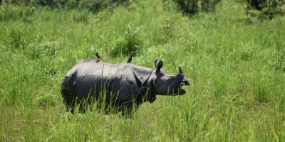 Fin dove si può arrivare per proteggere una specie in via d'estinzione?