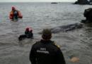 Un capodoglio spiaggiato in Spagna è morto perché aveva mangiato troppa plastica